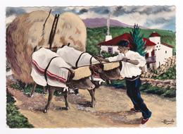 Illustrateur Homualk Région St Jean Pied De Port N°14 Uhard Cize Attelage De Vaches Basse Navarre Folklore Pays Basque - Homualk