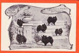 SAM089 PARIS 1er DOG'S PALACE 9 Rue De CASTIGLIONE Vente Chiens LOULOU De POMERANIE Illustration DUBOIS 1905 - Arrondissement: 01