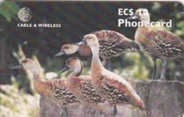 PHONE CARD- ANTIGUA BARBUDA (E57.9.5 - Antigua And Barbuda
