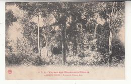 Cambodge - Voyage Aux Monuments Khmers - Angkor-thom - 83 - Ruines De Pimean Acas - Kambodscha