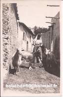Italie - Taormina - Galifi Crupi  Goat Capre - Italia