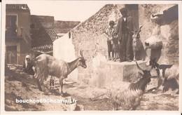 Italie - Taormina - Galifi Crupi- Goat Capre - Italia