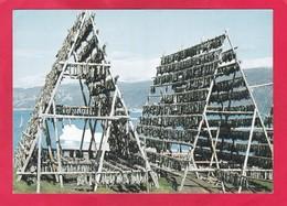 Modern Post Card Of Qassiarsuk,Kujalleq,Greenland.A52. - Grönland