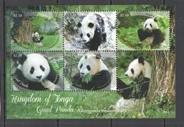 EC197 2013 KINGDOM OF TONGA FAUNA ANIMALS GIANT PANDA 1KB MNH - Bears