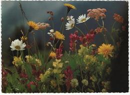 Wiesenblumen - Fleurs Des Champs - Field Flowers - (Suisse/Schweiz) - Switzerland