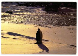 CPM    EXPEDITION ANTARCTIQUE FRANCAISE EN TERRE ADELIE  1988 1989   -  SPLEEN DU MANCHOT EMPEREUR - TAAF : Franse Zuidpoolgewesten