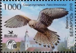 Belarus, 2010, Mi. 798, Sc. 719, SG 806, Bird, Falcon, Kestrel, MNH - Aquile & Rapaci Diurni
