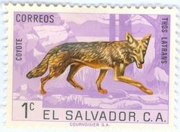 EL SALVADOR, FAUNA, ANIMALI, COYOTE, 1963, 1 C., FRANCOBOLLO NUOVO (MLH*)   Mi:SV 856, Scott:SV 738, Yt:SV 686 - Benin – Dahomey (1960-...)