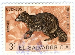 EL SALVADOR, FAUNA, ANIMALI, PROCIONE, 1963, 3 C., FRANCOBOLLO USATO   Mi:SV 858, Scott:SV 740, Yt:SV 688 - Benin – Dahomey (1960-...)