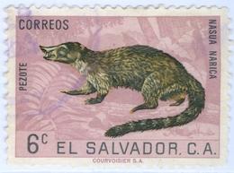 EL SALVADOR, FAUNA, ANIMALI, COATI, 1963, 6 C., FRANCOBOLLO USATO  Mi:SV 860, Scott:SV 742, Sg:SV 1184 - Benin – Dahomey (1960-...)