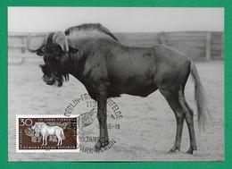 DDR 1965  Mi.Nr. 1095 , 10 Jahre Tierpark Berlin - Weißschwanzgnu - Maximum Card - Echt Foto - Berlin -8.-6.65 - DDR