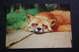 """""""Fox Dream"""", Fuchs (Raubtier), Renard, Fox - Modern Russian Postcard - Tierwelt & Fauna"""