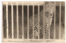AN 508  , OLD FANTASY CARD,  LIONS And TIGERS, Jardin Des Plantes , Paris - Leones