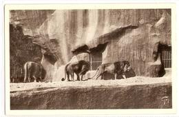 AN 511  , OLD FANTASY CARD,  LIONS And TIGERS, Jardin Zoologique De VINCENNES - Leones