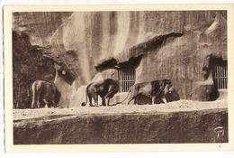 AN 518  , OLD FANTASY CARD,  LIONS And TIGERS, Parc Zoologique  , VINCENNES - Leones