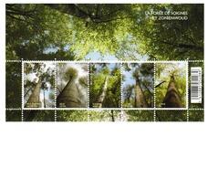 De Bomen Van Het Zoniënwoud.  Les Arbres De La Forêt De Soignes. - Belgien