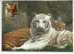 Amur Tiger & White Tiger (Save Vanishing Species) WWF. Maximum-card USA - Félins