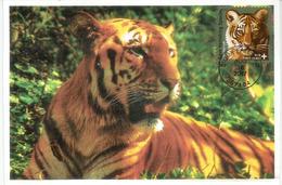 Amur Tiger (Tigre De Sibérie) Save Vanishing Species. WWF  Carte-maximum Etats-Unis - Cartes-maximum