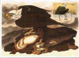 Aigle Royal (Bald Eagle).National Bird Of The USA.  Carte-Maximum  Etats-Unis - Arends & Roofvogels