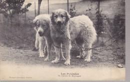 Les Pyrénées 70 Chiens De Montagne - Chiens