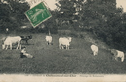 Environs Chateauneuf Sur Cher . Paturage De Bossereaux . Gardeuse De Vaches . Chien. Attelage Ane. - Chateauneuf Sur Cher