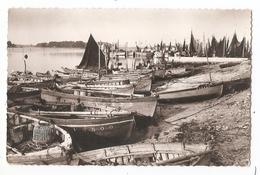 29 - LOCTUDY - Le Port - Loctudy