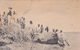 AFRIQUE - SOUDAN - Chasse à L'hippopotame - Animation - Sudan