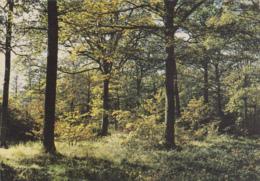 Sénart 91 - Forêt De Sénart - Editeur Raymon - Sénart