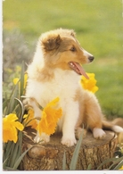 AN 546  , FANTASY POSTCARD , CPM , DOGS - Honden