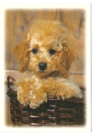 AN 553  , FANTASY POSTCARD , CPM  ,  DOGS - Chiens