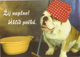 AN 558  , FANTASY POSTCARD , CPM  ,  DOGS , HUMOUR - Chiens
