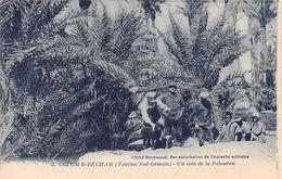 Colomb-Béchar Un Coin De La Palmeraie - Bechar (Colomb Béchar)