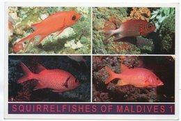 MALDIVES - SQIRRELFISHES (PHOTO MUSTAQ) / THEMATIC STAMP-BIRD - Maldive