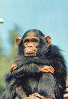Singe Monkey Animaux - Monos