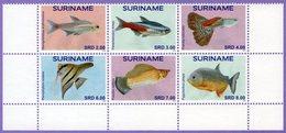 Surinam Suriname 2015.  Fauna. Fishes  Fish - Surinam
