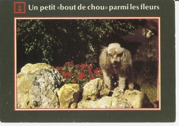 AN 572  , FANTASY POSTCARD , CPM  ,  DOGS  , - Chiens