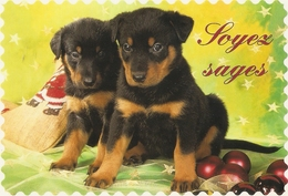 AN 574  , FANTASY POSTCARD , CPM  ,  DOGS  , - Chiens