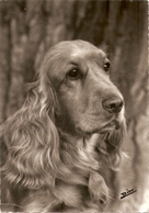 AN 575  , FANTASY POSTCARD , CPM  ,  DOGS  , - Honden