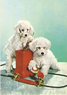 AN 579  , FANTASY POSTCARD , CPM  ,  DOGS  , - Chiens