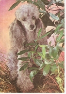AN 582  , FANTASY POSTCARD , CPM  ,  DOGS  , FINE ART , PAINTINGS - Chiens