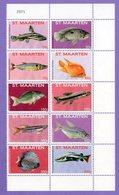 St. Maarten 2015 Fish.  Fish - Nature - Curazao, Antillas Holandesas, Aruba