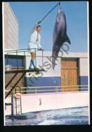 South Africa - Port Elizabeth - Dolphin - Oceanarium [AA29-1.937 - Sud Africa