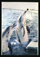 South Africa - Port Elizabeth - Dolphin - Oceanarium [AA29-1.942 - Sud Africa