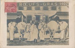 JOIGNY - CARTE PHOTO - BOEUFS GRAS 1907 - Joigny