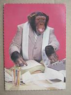 Monkey Accountant, 1975. - Monos
