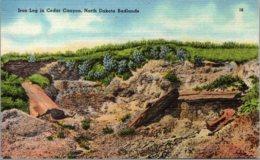 North Dakota Badlands Cedar Canyon Iron Log - Autres