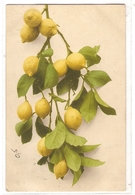 BF 32, OLD FANTASY POSTCARD , FLOWERS , MARTIN ROMMEL , MARO - Blumen