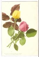 BF 44, OLD FANTASY POSTCARD , FLOWERS , MARTIN ROMMEL , MARO - Blumen