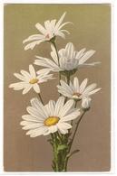 BF 46, OLD FANTASY POSTCARD , FLOWERS , MARTIN ROMMEL , MARO - Blumen