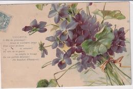 Violette Illustrateur Inconnu - Blumen